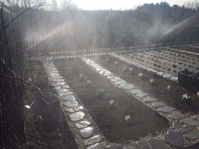 System nawadniania trawnika