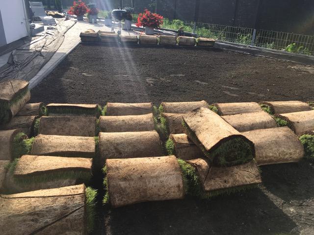 Rolki trawy przed rozwinięciem