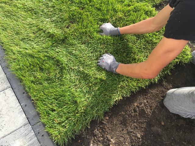 Układanie rolki trawy